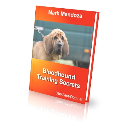 Bloodhound training secrets how to train a bloodhound finally i present an ebook dedicated specifically to lovers of bloodhounds fandeluxe Image collections