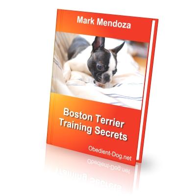 Boston Terrier Training Secrets How To Train A Boston
