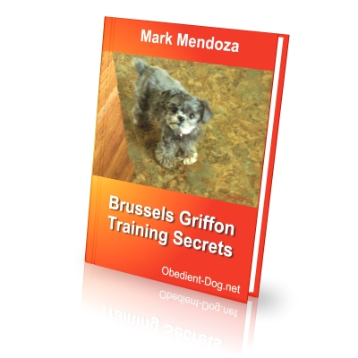 1. Brussels Griffons 101 – Information, Personality and Characteristics