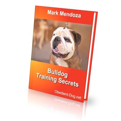 Dear Bulldog owner or future Bulldog owner