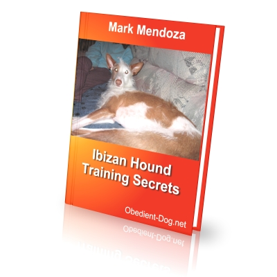 Ibizan hound training secrets how to train a gordon setter finally i present an ebook dedicated specifically to lovers of ibizan hound s fandeluxe Gallery